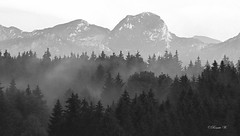 Nach dem Regen! (Renata1109) Tags: wendelstein berg mountain bayern deutschland aussicht outdoor nebel nebelschwaden fog regen abend bavaria heimat baum bäume wald schwarzweis blackwhite