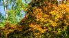 Moorlands Nature Reserve (alh1) Tags: yorkshirewildlifetrust england northyorkshire wigginton acer