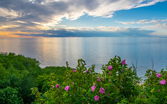 Sunset for the Flowers (Harles Azza Photography) Tags: flowers sunset landscape estonia