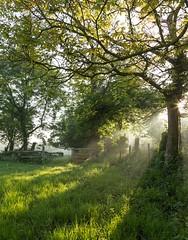 Bocage (antoine.to) Tags: tree nature landscape ecotourisme normandie bio biologique light sunrise bocage campagne caux tourisme france