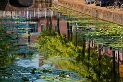 gracht-in-Delft (Don Pedro de Carrion de los Condes !) Tags: donpedro d700 spiegeling gracht water kade bomen hollands delft toeristen waterplanten stad stadsgezicht canal stadsgracht lilies waterlelies