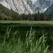 Yosemite: Wild Grass
