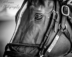 Bee Jersey (EASY GOER) Tags: horses racing equine thoroughbred sports belmontpark horseracing races athletes canon5dmarkiii