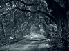 mystic path (Darek Drapala) Tags: panasonic poland polska panasonicg5 park plants path lumix light legnica sepia nature natural mood morning mystery mystic