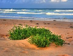 Wintertime beach IV (elphweb) Tags: hdr highdynamicrange nsw australia beach water sand ocean sea seaside
