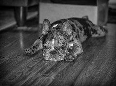 DSC01166-Edit (James Jr1) Tags: blue dogs lily nola pets