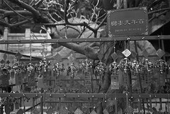 媽祖閣_4 (Taiwan's Riccardo) Tags: 2018 135film negative bw ultrafine400 plustek8200i fujifilmklassew fujifilmlens fujinon ebc fixed 28mmf28 macau 澳門 澳門歷史城區 媽祖閣