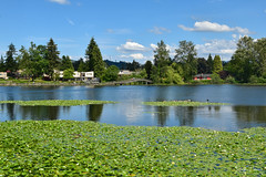 Mill Lake, Abbotsford (SonjaPetersonPh♡tography) Tags: milllake milllakepark trails lake walkingtrails landscape lakefront nature scenic scenery bc bcparks britishcolumbia canada nikon nikond5300 trees lilypads waterlilies abbotsford walkways paths birds waterfowl canadageese boardwalk fraservalley water pathways park forest lakeside shoreline westernpaintedturtles wharf logs shore waterreflections reflections lookouts viewpoints