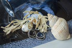 marine still life (Wendy:) Tags: marinestilllife shells seaweed earrings blue ceramics glass