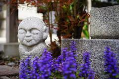 Ojizou-sama (Eric Flexyourhead) Tags: higashiyama higashiyamaku 東山区 kyoto 京都市 kansai 関西地方 japan 日本 zenkyoan 禅居庵 detail fragment temple japanese buddhist buddhism jizou ojizou shallowdepthoffield sonyalphaa7 zeisssonnartfe55mmf18za zeiss 55mmf18