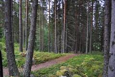 Woodland paths (charlottehbest) Tags: charlottehbest september 2017 honeymoon scandinavia theadventuresofhenryjruffington roadtrip