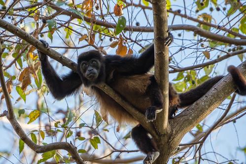 Parque y Mariposario Charco Verde, Ometepe, Departamento de Rivas - Nicaragua