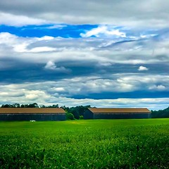 I had to pull over and capture this. #bestcameraistheonewithyou #farm #carries_captures3 #newengland #crops #connecticut #carriesphotos #photooftheday #newenglandphotography #naturalnewengland #scenesofnewengland #connecticutgram #igersnewengland #ignewen (auntcarri) Tags: ifttt instagram i had pull over capture this bestcameraistheonewithyou farm carriescaptures3 newengland crops connecticut carriesphotos photooftheday newenglandphotography naturalnewengland scenesofnewengland connecticutgram igersnewengland ignewengland onlyinconnecticut iheartconnecticut landscapephotography landscapelovers corn sky latespring barn clouds storm