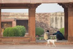 Palace dog (Tim Brown's Pictures) Tags: india uttarpradesh fatehpursikri palace tomb akbar akbarthegreat moghulempire visitors tourism historic architecture buildings color mughal dog couple worldheritagesite unesco up