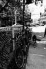 La promenade... (woltarise) Tags: animal promenade viaduc vanhorne rosemont chien bicyclettes montréal streetwise iphone6s littledoglaughednoiret