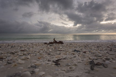seashells galore washed up on the shore... (Ken B Gray) Tags: dusk seashells marcoisland florida gulfofmexico stormclouds cloudyskies seaweed groundlevel 1740f4l 6d