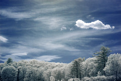 blue skies (jerhetrick) Tags: ir photo infrared forest canon 70d full spectrum modified outdoors 720nm 960nm 1855 dslr kitlens 18mm55mm wide angle