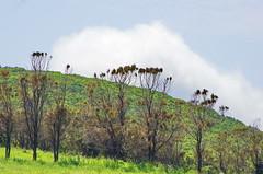 264 - Cap Corse, sur le sentier des douaniers au nord de Macinaggio, les prairies devant la Rade de Santa Maria (paspog) Tags: corse capcorse france praire field feld radesantamaria sentierdesdouaniers mai may 2018