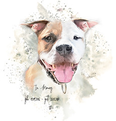 In Memory of an old friend.. (PikCell-Art (open for Clients)) Tags: dog painting digital art animal rescue staffordshire terrier amstaff tierschutz digitalartpainting