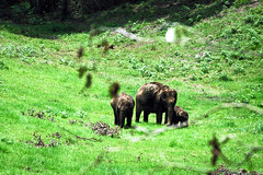 Munnar: Top Station Road (deepgoswami) Tags: india kerala munnar topstation elephants
