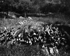 9148 (Greg.photographie) Tags: mamiya rb pros 6x7 sekor 65mm f45 film analog shanghai gp3 expired r09 noiretblanc bw blackandwhite moyenformat mediumformat bois