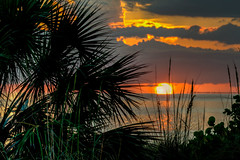 Gulf Coast Sunset (ap0013) Tags: sunset florida gulf coast water ocean palm tropical floridasunset fl fla emersonpoint palmettoflorida