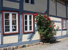 Rehnaer Mauerblümchen (Mecklenburg-Foto) Tags: rehna fachwerk fachwerkhaus blumen rosen mecklenburg