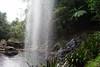 Australia_2018-218.jpg (emmachachere) Tags: subtropical trees hike waterfall boatride springbrook australia rainforest kanagroo animals koala brisbane boat lonepinekoalasanctuary
