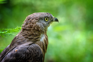 Wildlife Bayerischer Wald - Nr. 02
