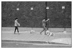 Damas con perritos (Eugenio García.) Tags: fotocallejera streetphotography leica m3 elmar 5cm 28 ilford hp5 ddx epsonv700 betterscanning