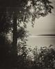 Matin de juin sur le lac... (Argentique) /Sunrise in june on the lake... (Film) (Pentax_clic) Tags: agfa ventura solinar 85mm deluxe 66 tx400 d76diy 11 lac lake matin soleil argentique film nb bw juin 2018 robert warren