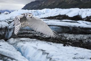 Snowy Cruiser Photobomber_T3W2833_MG_8760