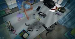 snap316 (Ella SL) Tags: secondlife office work cap sleeping raccoon food salacity