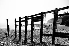 Seaford 2018-40 (AntonioA) Tags: green seaford uk cuckmerehaven summer beachcliff sevensisters