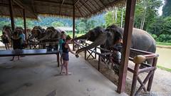 Thailand2018-108 (Wizza_Wozza) Tags: thailand khao sok koh samui bangkok hills elephant holiday