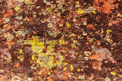 Lichen Art (chasingthelight10) Tags: events photography travel landscapes canyons rockformations places arizona sedona cathedralrock otherkeywords abstract detail closeups