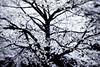 Sakura flowers wallpapers by Telasm (Khói o.O) Tags: sakura sakuranohana telasm asien bluehen bluete blumenschau chiyoda garten hanami imperialpalaceeastgarden japan kirschbluete kirsche kokyo nihon nippon park romantik schnee tokio tokyo