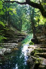 Suisse (solennegau) Tags: suisse voyage trip couleurs nature tree water nikon d3400 pierre ruisseau forêt eau arbre bois switzerland