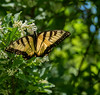 Butterfly (Dave_Bradley) Tags: insect flower butterfly outdoor nature outdoorphotography upclose naturephotography olympus odm em5 olympusodmem5 outofnature