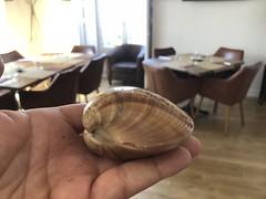Almeja de concha fina. Chef Koketo (JorgeHernandezAlonso) Tags: gastronomíamalagueña cocinamalagueña comidamalagueña gastronomíaandaluza molusco almejas chefkoketo koketo