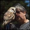 Dizzy, Barn Owl (kcm76) Tags: walthamabbey codafalconry birds 2018 olympuse620 noreen
