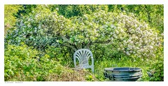 The Magic Apple Tree in spring, Castlefield Allotments, Eynsford. Kent. (Richard Murrin Art) Tags: apple tree spring eynsford kent england richard murrin
