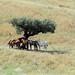 a horses place (lualba) Tags: animal horse tree nature alentejo portugal sun spring