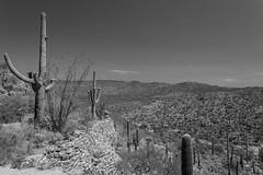 deserted (jimmy_racoon) Tags: 1740mm f4l canon 5d mk2 bw black white saguaro national park arizona cactus desert landscape rincons tucson 1740mmf4l canon5dmk2 blackwhite saguaronationalpark