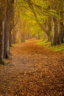 A golden autumn path