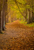 A golden autumn path (The Frustrated Photog (Anthony) ADPphotography) Tags: bedfordshire category england flora luton places travel park path footpath trees golden autumn fall autumncolours fallcolors leaves fallenleaves colourful canon1585mm canon70d canon outdoor tree trail leaf