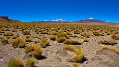 Salar de Tara lake shore (hardywang) Tags: chile atacama salardetara wetland