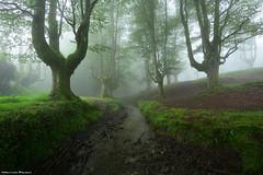 The river of dark souls (Hector Prada) Tags: bosque forest fog niebla rio river dark creepy spring idyllic primavera moss musgo mystic trees árbol enchanted misterioso encantado haunted