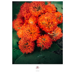 日常‧ 盛夏果實 (楚志遠) Tags: 楚志遠 凍先生 日常 生活 果實 植物 小物 grii ricoh