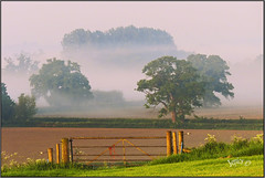 The Way In Or The Way Out.. (Picture post.) Tags: landscape nature green mist gate fields sunlight morning summertime paysage arbre brume oak trees